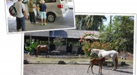Horse Riding in Bali  Da...